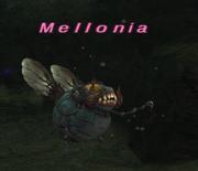 Mellonia