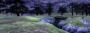 Jugner-forest-pic