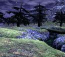 Jugner Forest