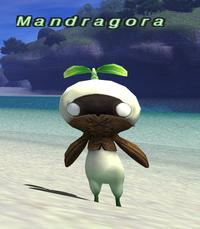 Rearing-mandragora