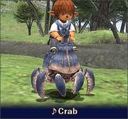 Crab 500pt en