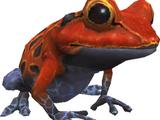 Vermilion Toad (MON)