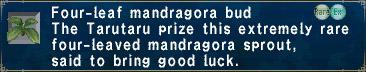 Four-Leaf-Mandragora-Bud