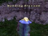 Numbing Blossom