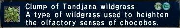 Tandjanawildgrass