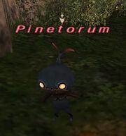 Pinetorum