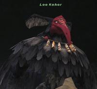 LooKohor