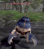 Limicoline crab
