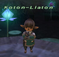 Koton-llaton