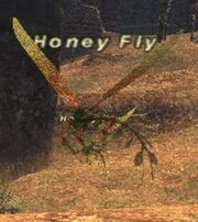 Honey Fly