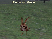 Forest-Hare