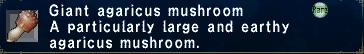Giant agaricus mushroom