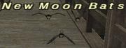 New Moon Bats