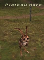Plateau hare