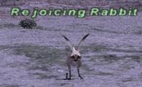 Rejoicing Rabbit