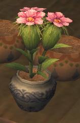 Grainseedplant