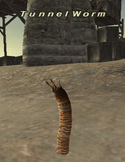 Tunnelworm