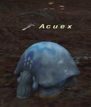 Acuex