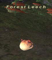 Forest Leech