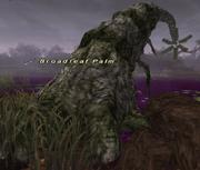 Broadleaf Palm