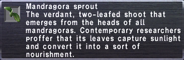 Mandragora Sprout