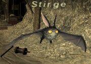 Stirge