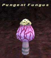 Pungent Fungus