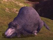 Dozing Dorian