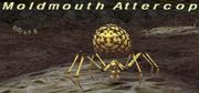 Moldmouth Attercop