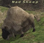 Madsheep