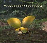 Resplendent Luckybug