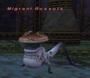 Migrant Russula