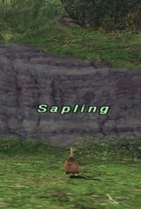 Rearing-sapling