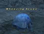 Wheezing Acuex