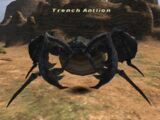 Trench Antlion