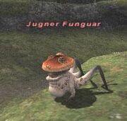 Jugner Funguar