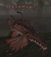 Land Pugil