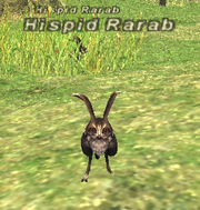 Hispid Rarab