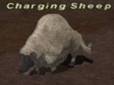 Charging Sheep