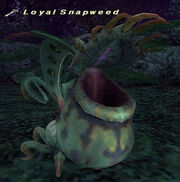 Loyal Snapweed
