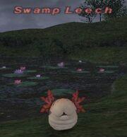 Swamp Leech