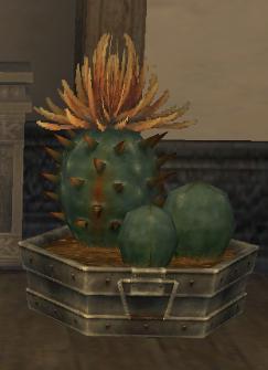 Scimitar Cactus MH
