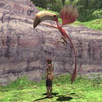 Rearing-colibri