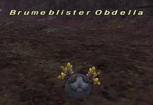 Blumeblister Obdella