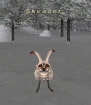 Skvader