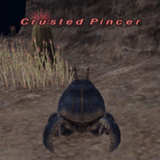 Crusted Pincer