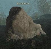 Mosshorn