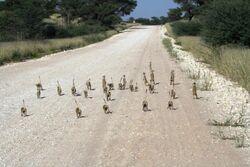 Hobbits on road