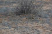 Baobab Mar 2013-19-118-M