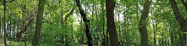Habitat-woodland
